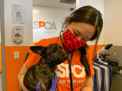 New ASPCA data shows that the vast majority of dogs and cats acquired during the pandemic are still in their homes – this includes 90% for dogs and 85% for cats.